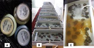 analysis of oil spill escenarios